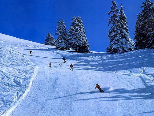 阿尔卑斯滑雪