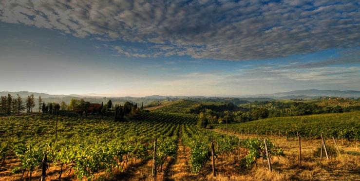 意大利葡萄酒园