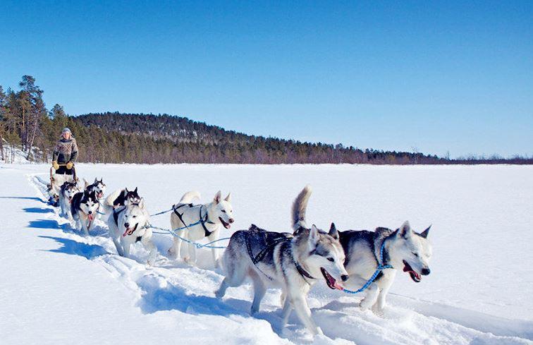 罗瓦涅米的雪橇之旅