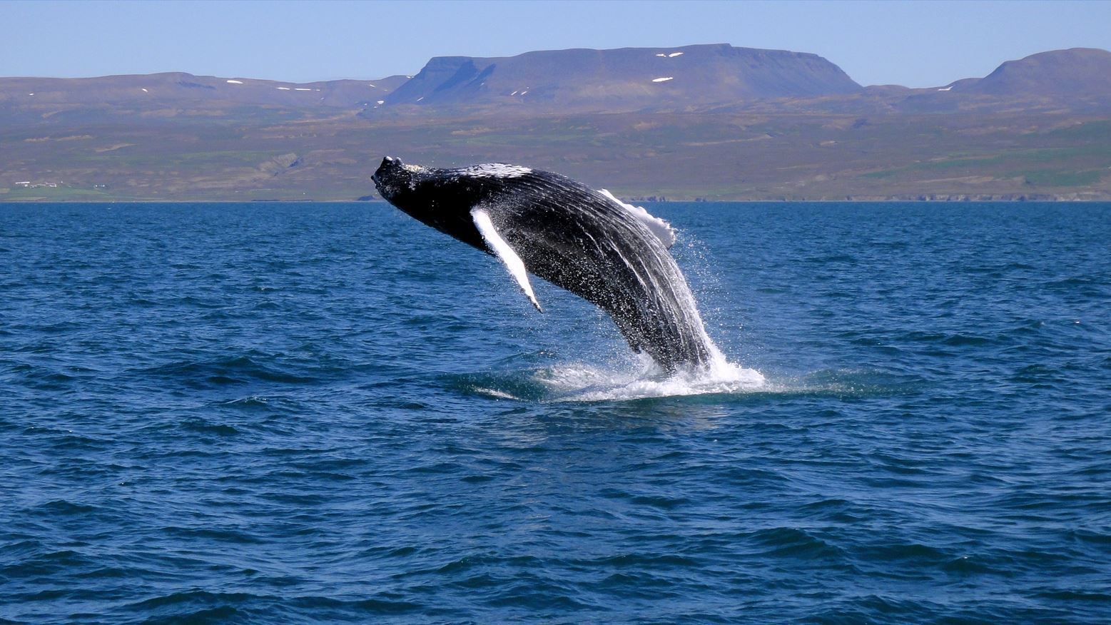 冰岛高端旅游之胡萨维克