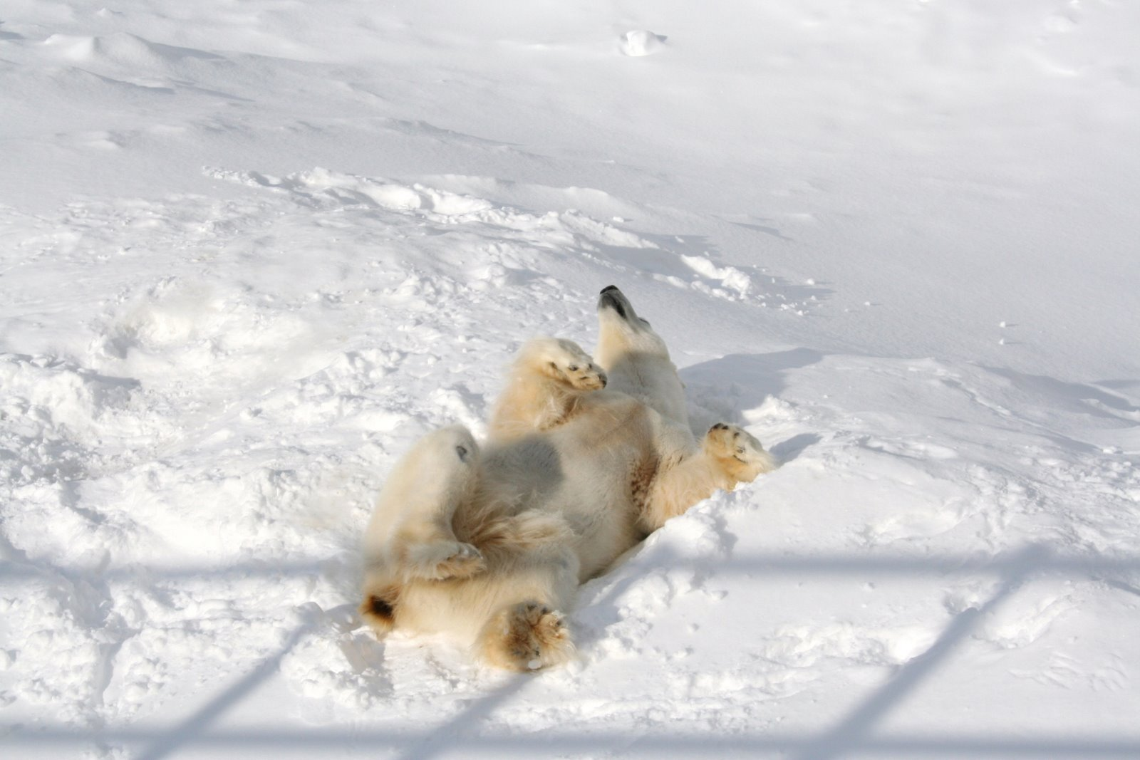 芬兰国家动物园